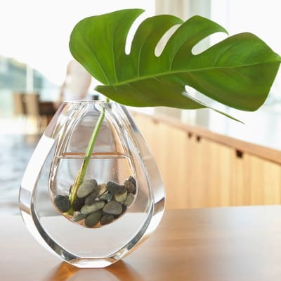 Plant in a decorative vase at Sofi Dublin in Dublin, California