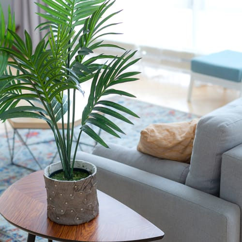 Beautiful home plant at Kinect @ Broadway in Everett, Washington