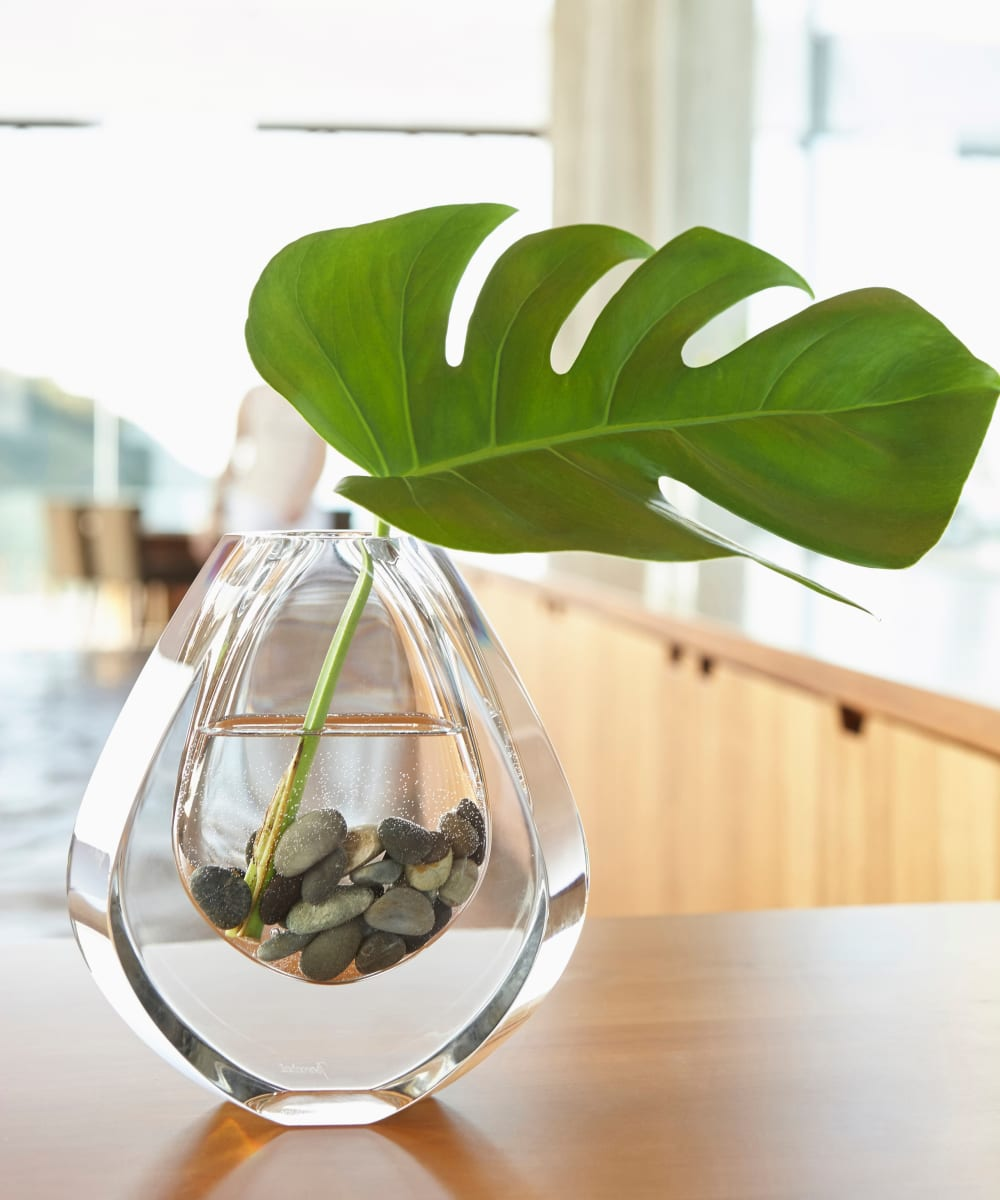Monstera leaf in a tear drop shaped vase at Sofi Parc Grove in Stamford, Connecticut