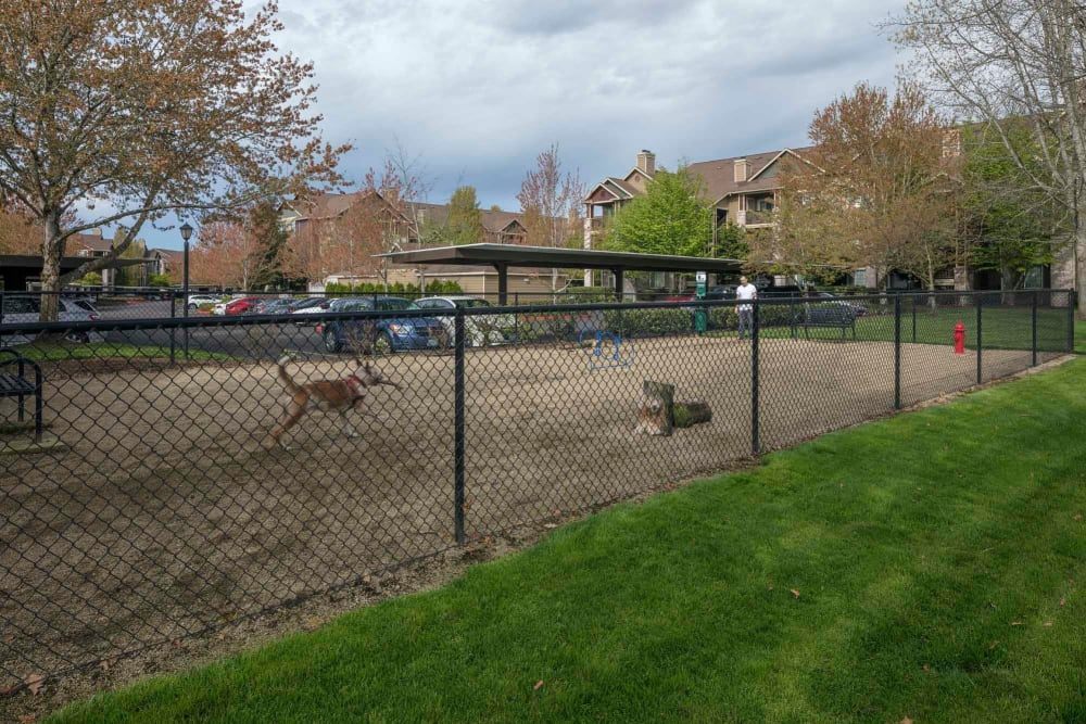 Have fun with your furry friend in the dog park at The Grove at Orenco Station in Hillsboro, Oregon