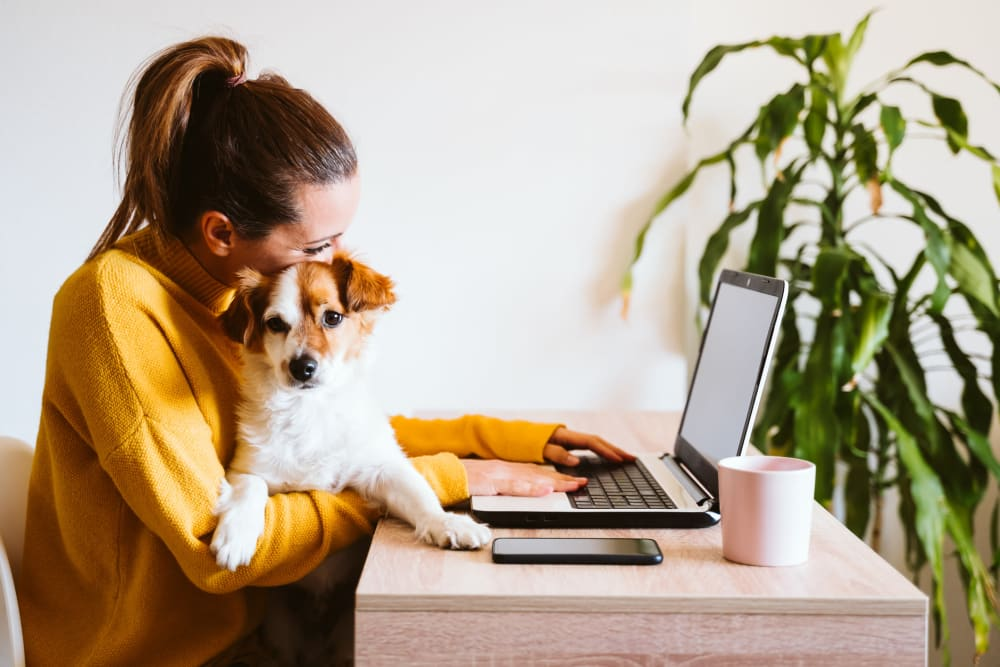 Resident working on her computer with her dog on her lap at Oaks Minnehaha Longfellow in Minneapolis, Minnesota