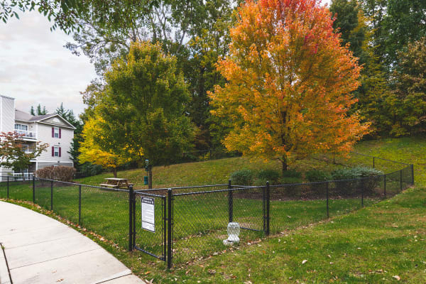Dog park at Sunchase at James Madison in Harrisonburg, Virginia