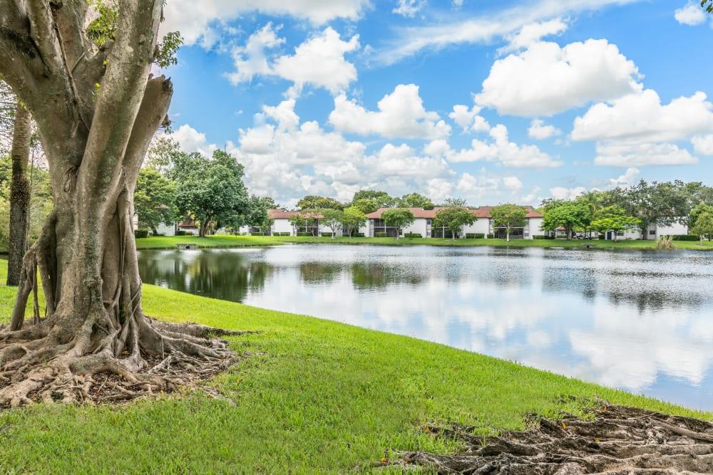 Lakeside views at Siena Apartments in Plantation, Florida