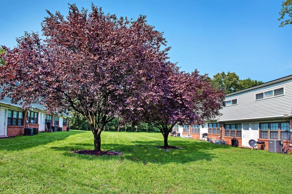 Modern apartments with lush foliage in Halethorpe, Maryland