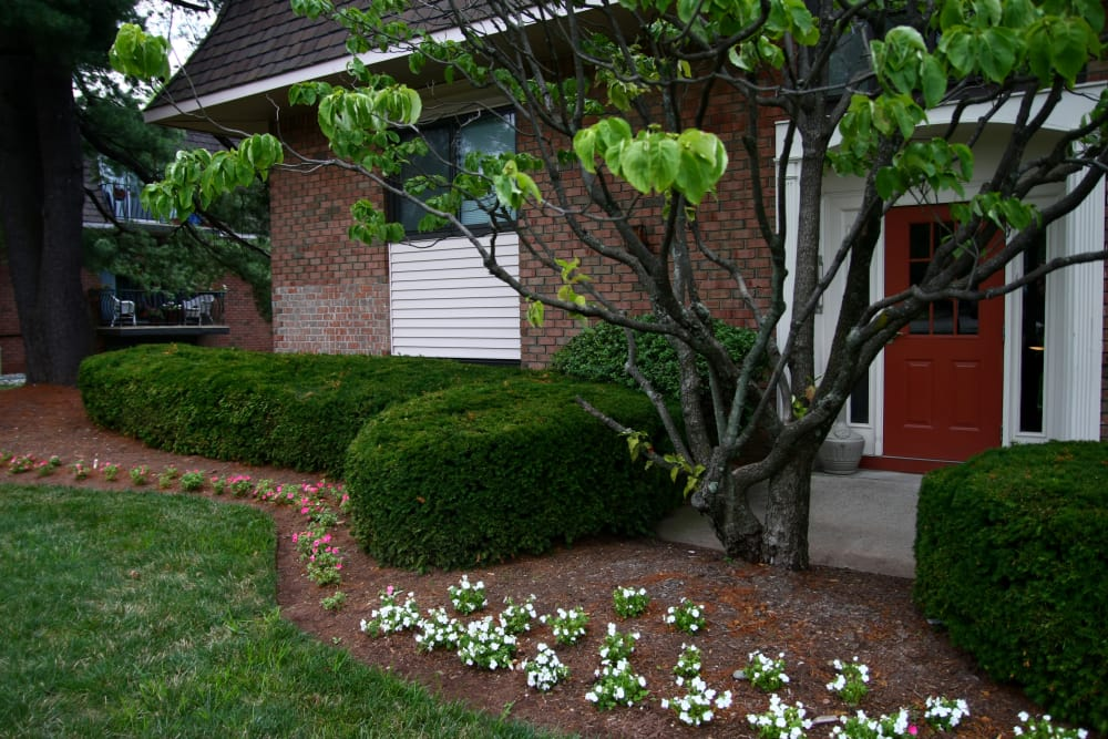 Beautifully maintained  shrubberies at North Hills Apartments