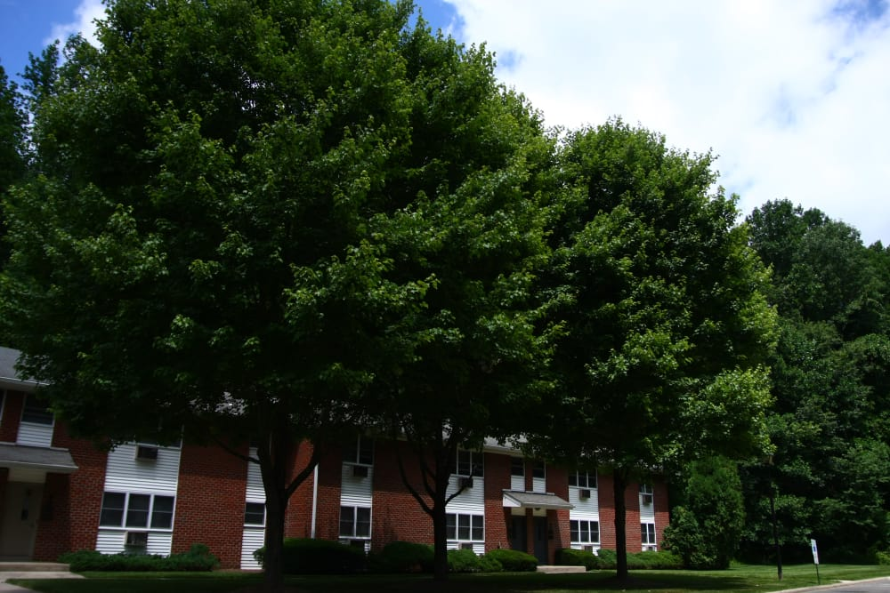 Mature trees and meticulously maintained lawn at Pointe Breeze Apartments