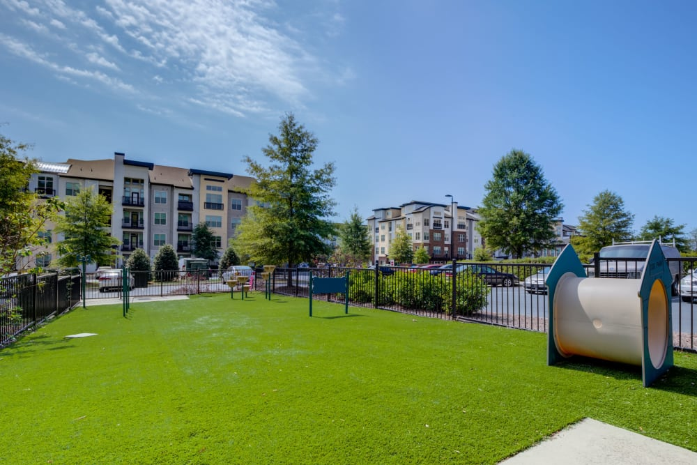 Onsite dog park at Celsius Apartment Homes in Charlotte, North Carolina