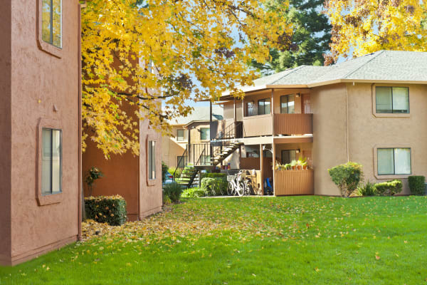 Spacious yard at Pine Tree Apartments in Chico, California