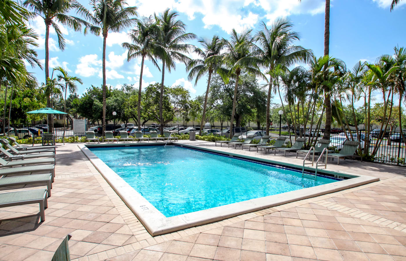 Beautiful sparkling swimming pool at Aliro in North Miami, Florida