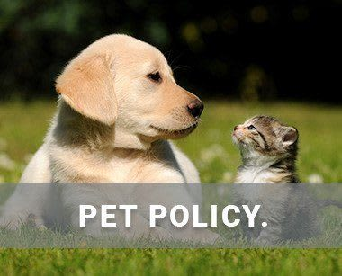 Pet policy at Spice Tree Apartments