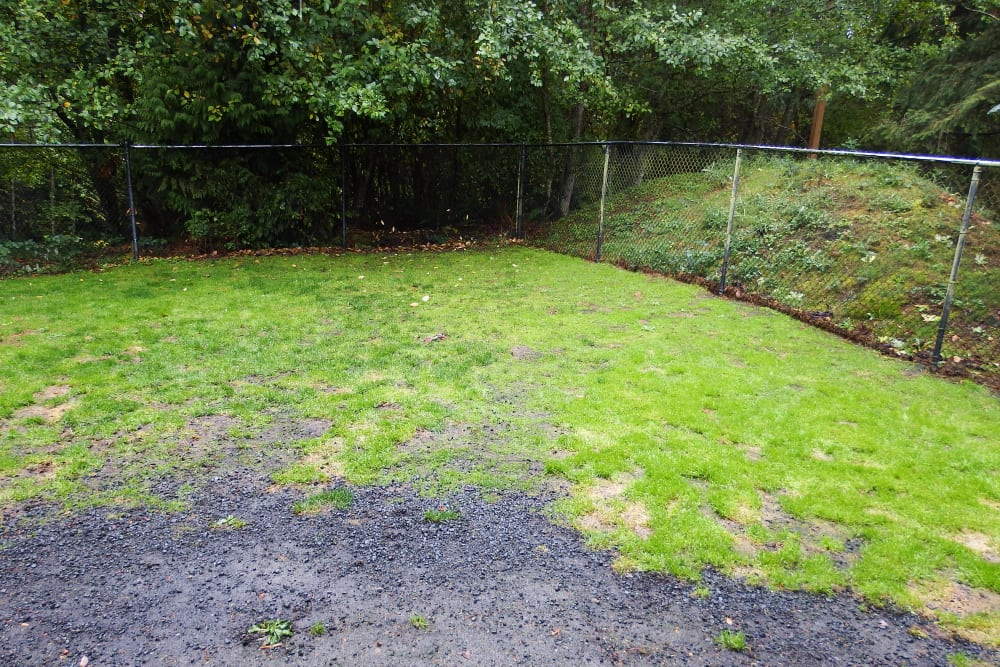 Garden outside of Angeles Clinic For Animals in Port Angeles, Washington