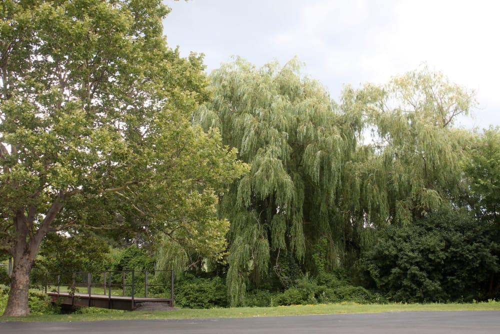 Greenery near Triad Apartments