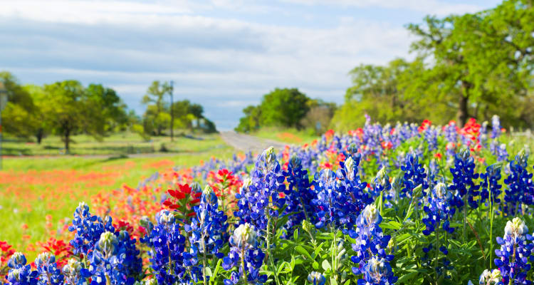 Wildflowers growing near The Landing at Mansfield in Mansfield, Texas