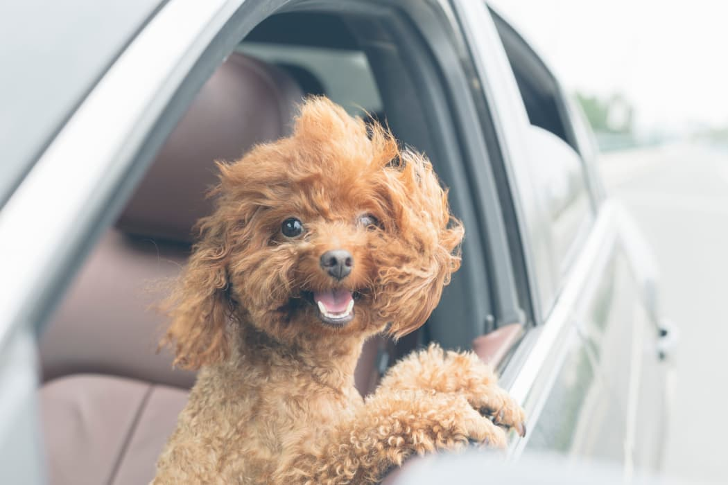 Happy puppy in a car at Arbors of Pleasant Valley in Little Rock, Arkansas