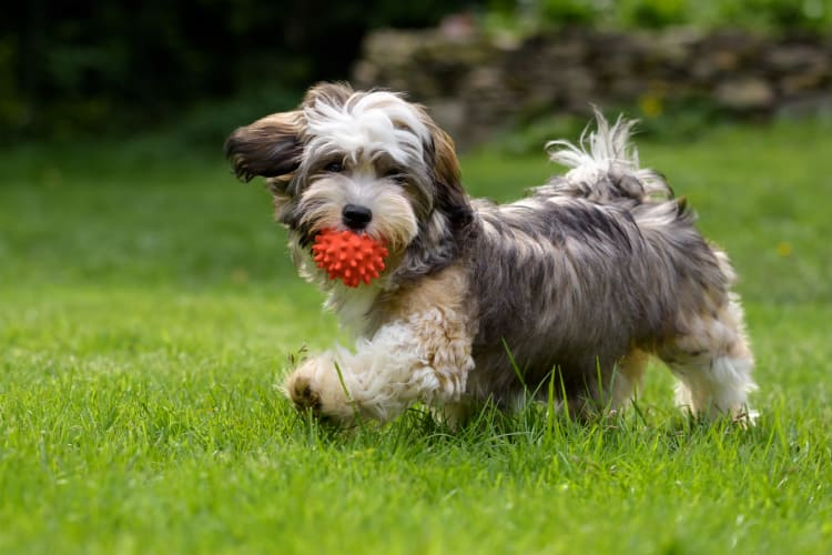A dog playing fetch at Paces Landing Apartments in Gainesville, Georgia
