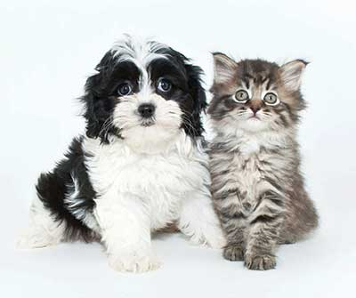 Cute dog and cat at Waters Edge Apartments in Webster, New York