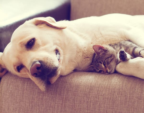 Dog and kitten cuddling on a couch at The Stanton in Lockhart, Texas
