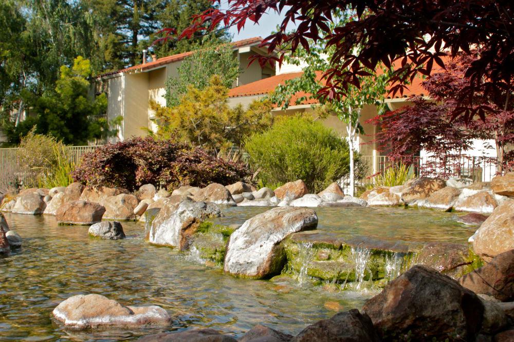 Beautiful pond at Spring Creek Apartments in Santa Clara, California