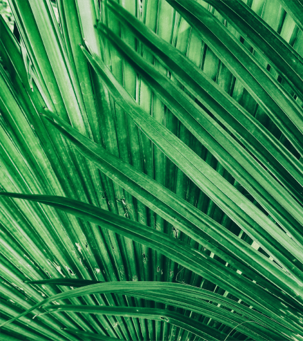 Picture of palm leaves near Fusion in Jacksonville, Florida