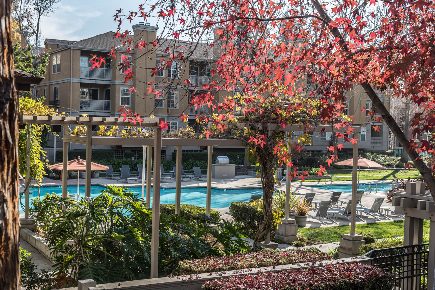 Enjoy a swimming pool at Bella Vista Apartments in Santa Clara, California