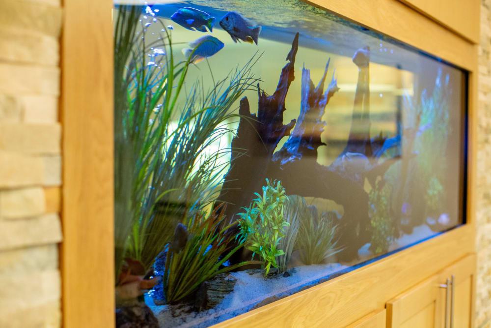Fish tank at Quail Park at Morrison Ranch in Gilbert, Arizona