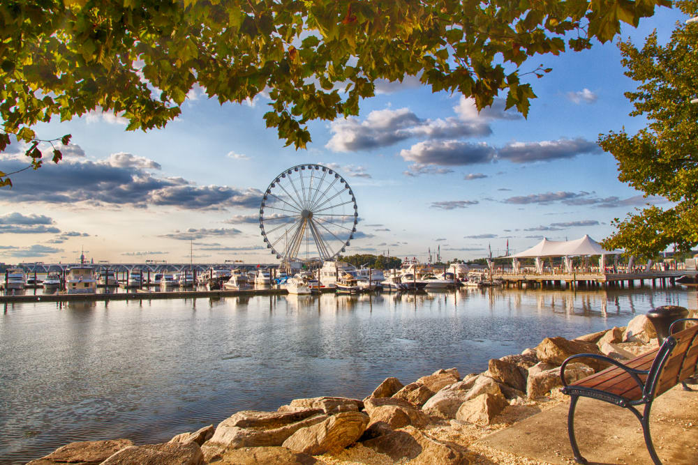 Boats docked in front of the pier and ferris wheel in late summer in Washington, District of Columbia near Wheeler Terrace