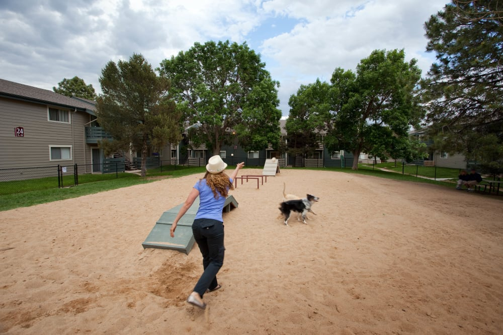 On site dog park at Hampden Heights Apartments in Denver, Colorado being enjoyed by a resident and her happy border collie