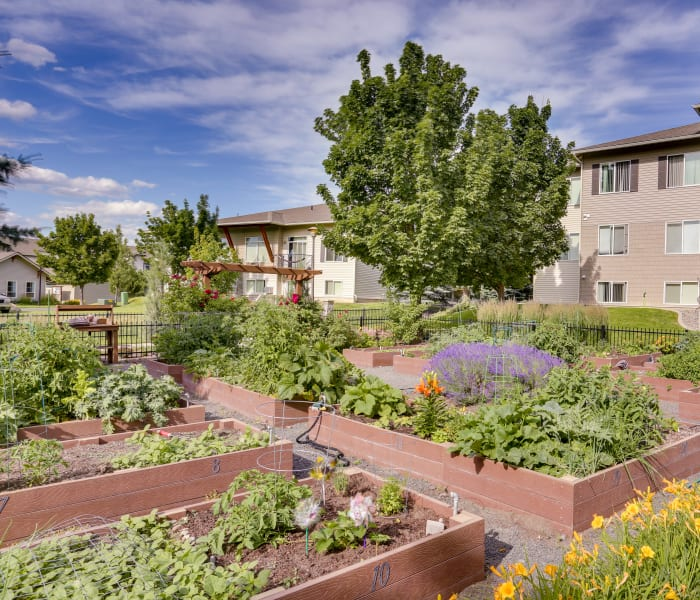 Lush community garden at Big Trout Lodge in Liberty Lake, WA