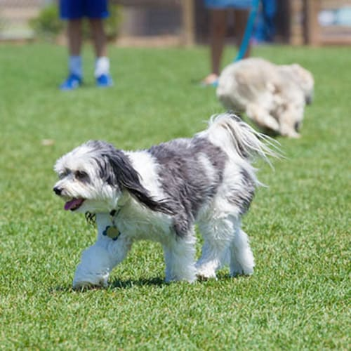 Dogs at a dog park in Jacksonville Beach, Florida near Ocean Park of Ponte Vedra