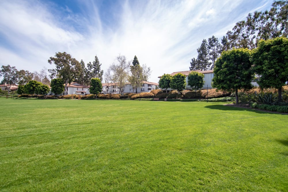 Large grassy field great for pets at Avana La Jolla Apartments in San Diego, CA