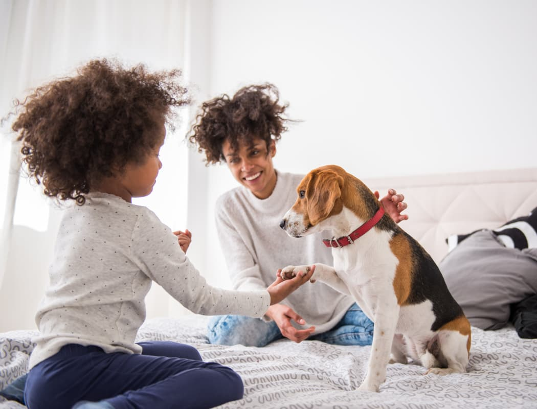 Zuni Plaza Apartment Homes offers beautiful pet friendly apartments in Denver, Colorado