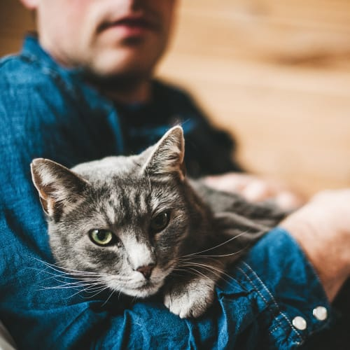 Man holding his cat in his lap at Fusion in Jacksonville, Florida