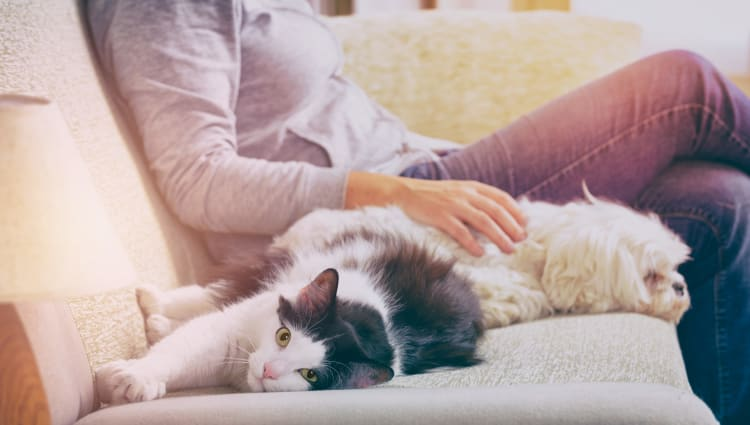 Resident and her pets relaxing in their new home at Grayson Ridge in North Richland Hills, Texas