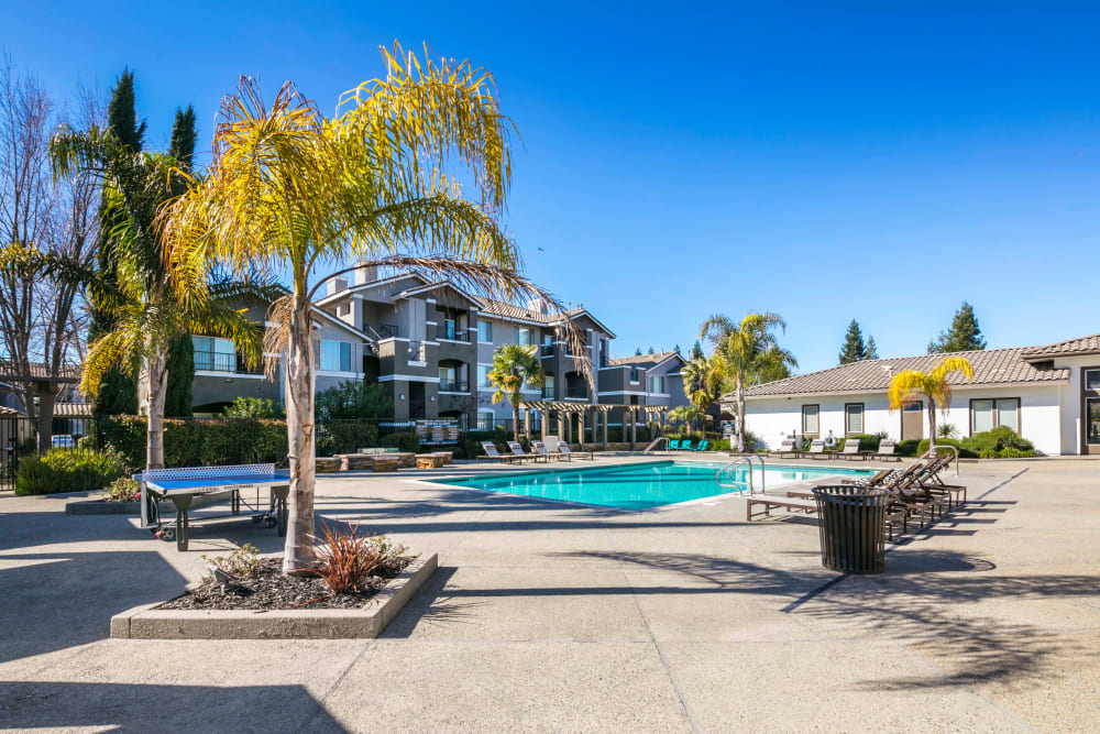 Beautiful resort-style swimming pool surrounded by palm trees at Miramonte and Trovas in Sacramento, California