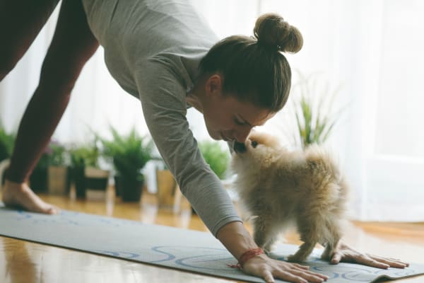 Woman doing yoga with dog at The West End Apartments in Verona, Wisconsin