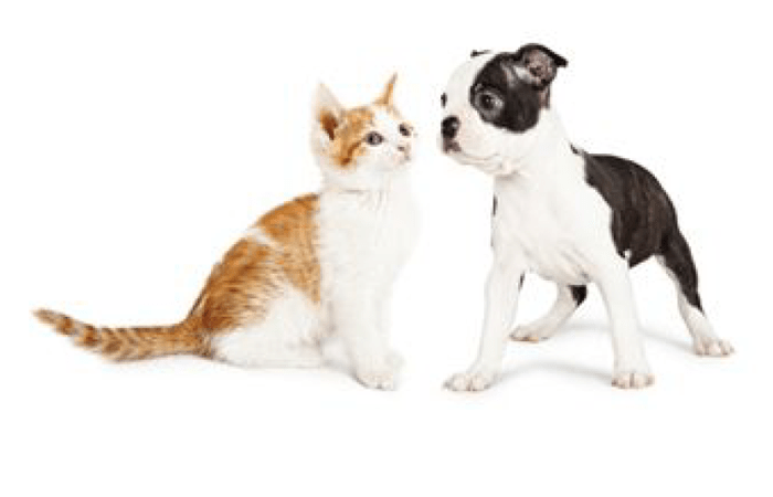 Animal Hospital in Dublin are here to make your pets happy and healthy