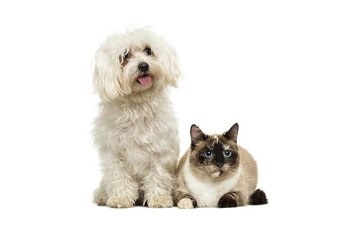 Pup and cat with blue eyes that have been treated at Apple Tree Cove Animal Hospital in Kingston, Washington