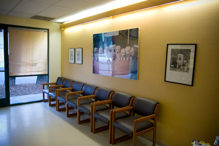 Lafayette Animal Hospital waiting area in Lafayette, California