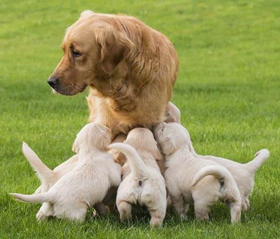 Mother dog nursing her litter at Parkview Animal Hospital