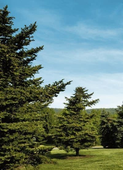 The grounds at The Village of Laurel Ridge in Harrisburg, Pennsylvania