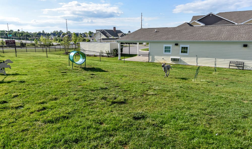 Pet friendly living at Springs at Sandstone Ranch in Longmont, CO
