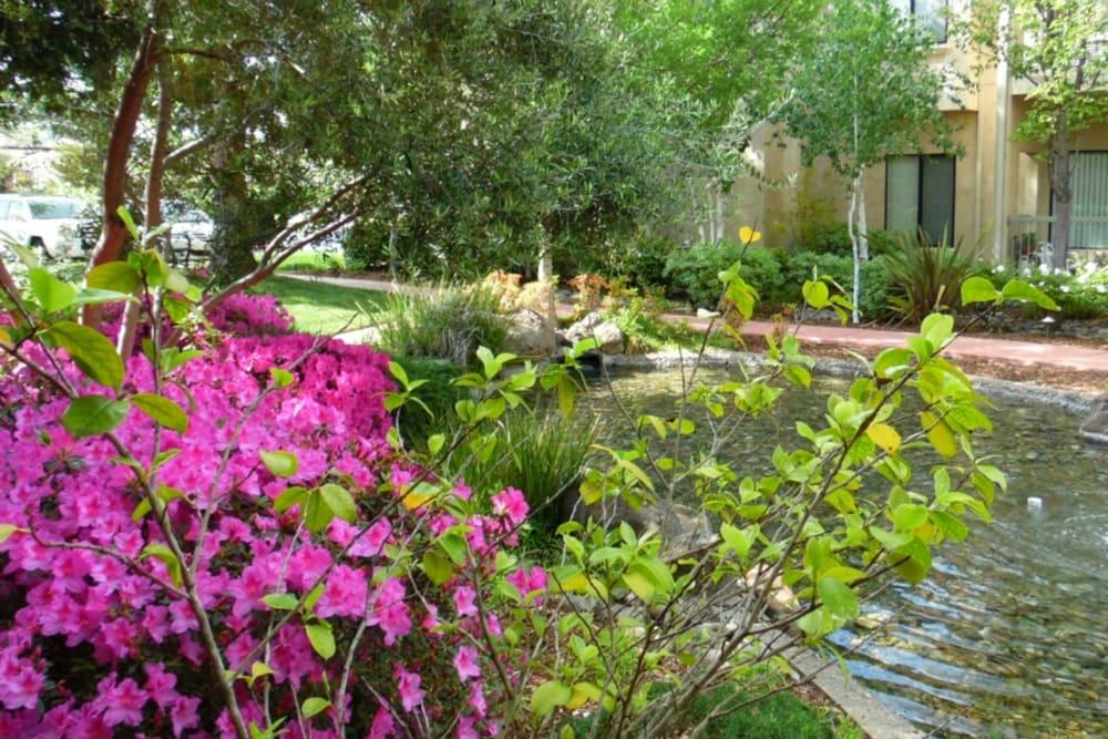 Beautiful pond at Winding Commons Senior Living in Carmichael, California