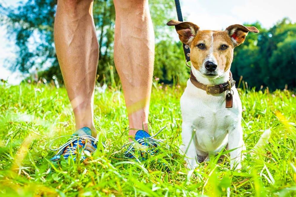 Jogger and dog near Vela on the Park