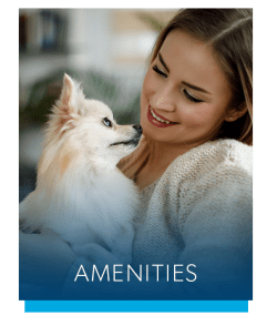 Amenities at Avery Park Apartment Homes