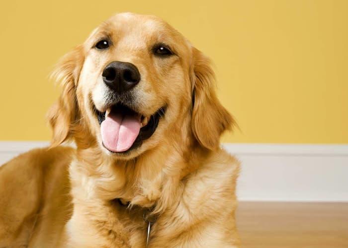 Happy dog at University Pet Resort in Merced, California