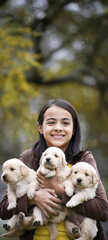 Child with an armful of puppies at Value Pet Clinic - Kent