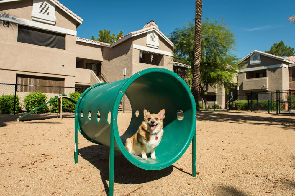 Dog park at The Palisades at Paradise Valley Mall in Phoenix, Arizona