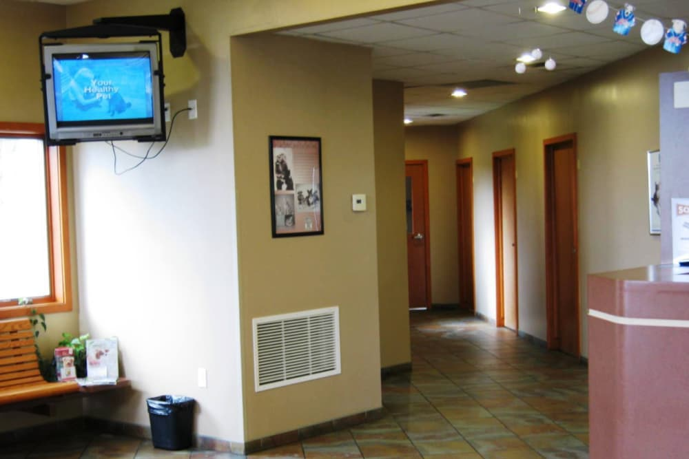 Comfortable reception area at Niles Veterinary Clinic in Niles, Ohio