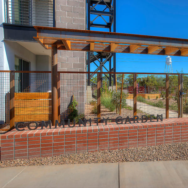 Community garden at District Lofts in Gilbert, Arizona