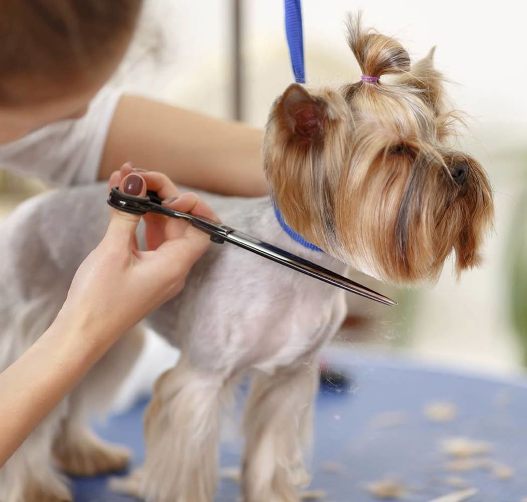 Pup getting groomed at Arizona Avenue Animal Clinic in Chandler, AZ